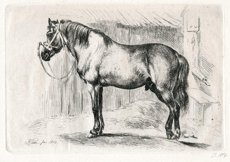 Das Pferd mit dem Kappzaum Gesamtansicht