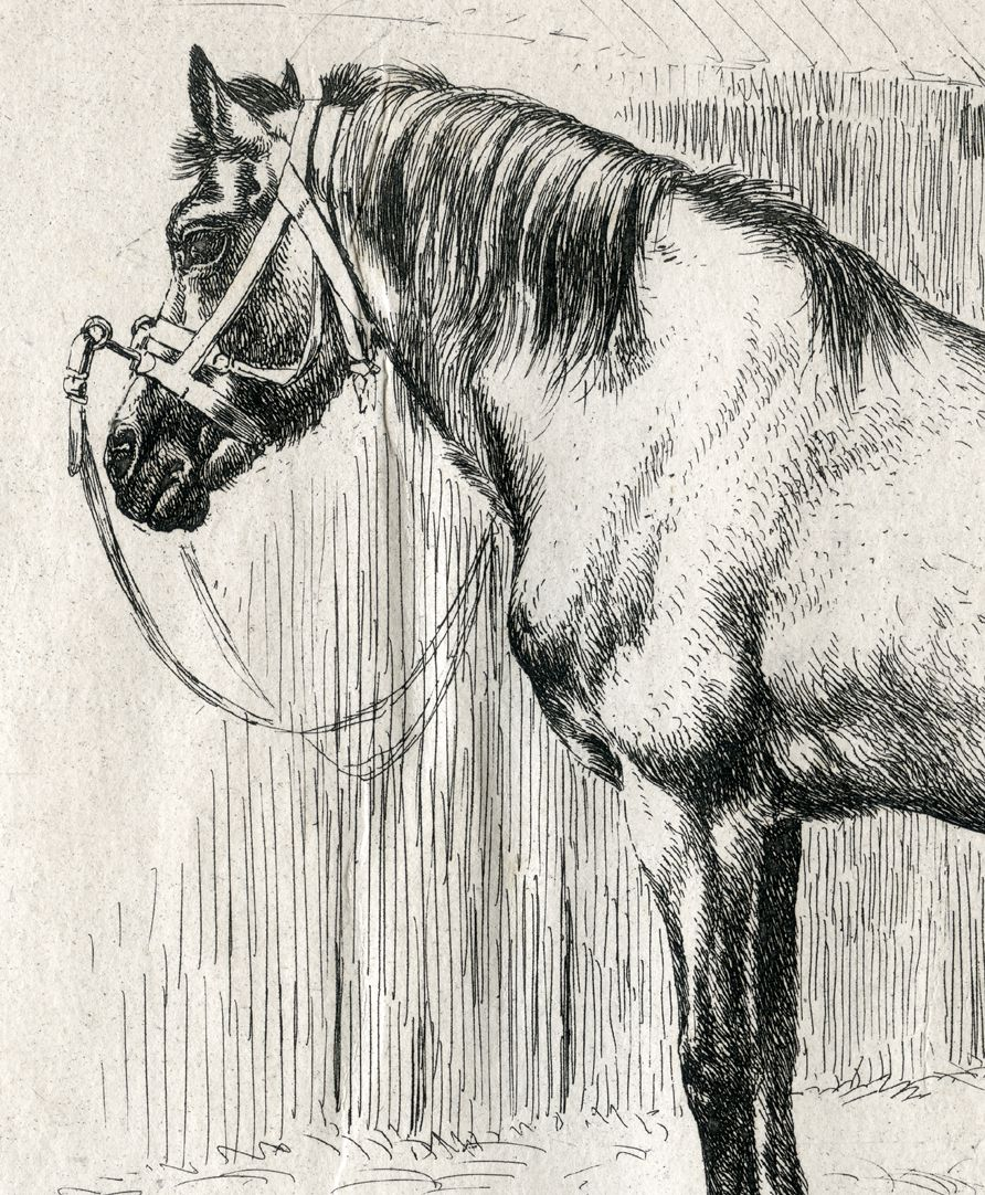 Das Pferd mit dem Kappzaum Detail