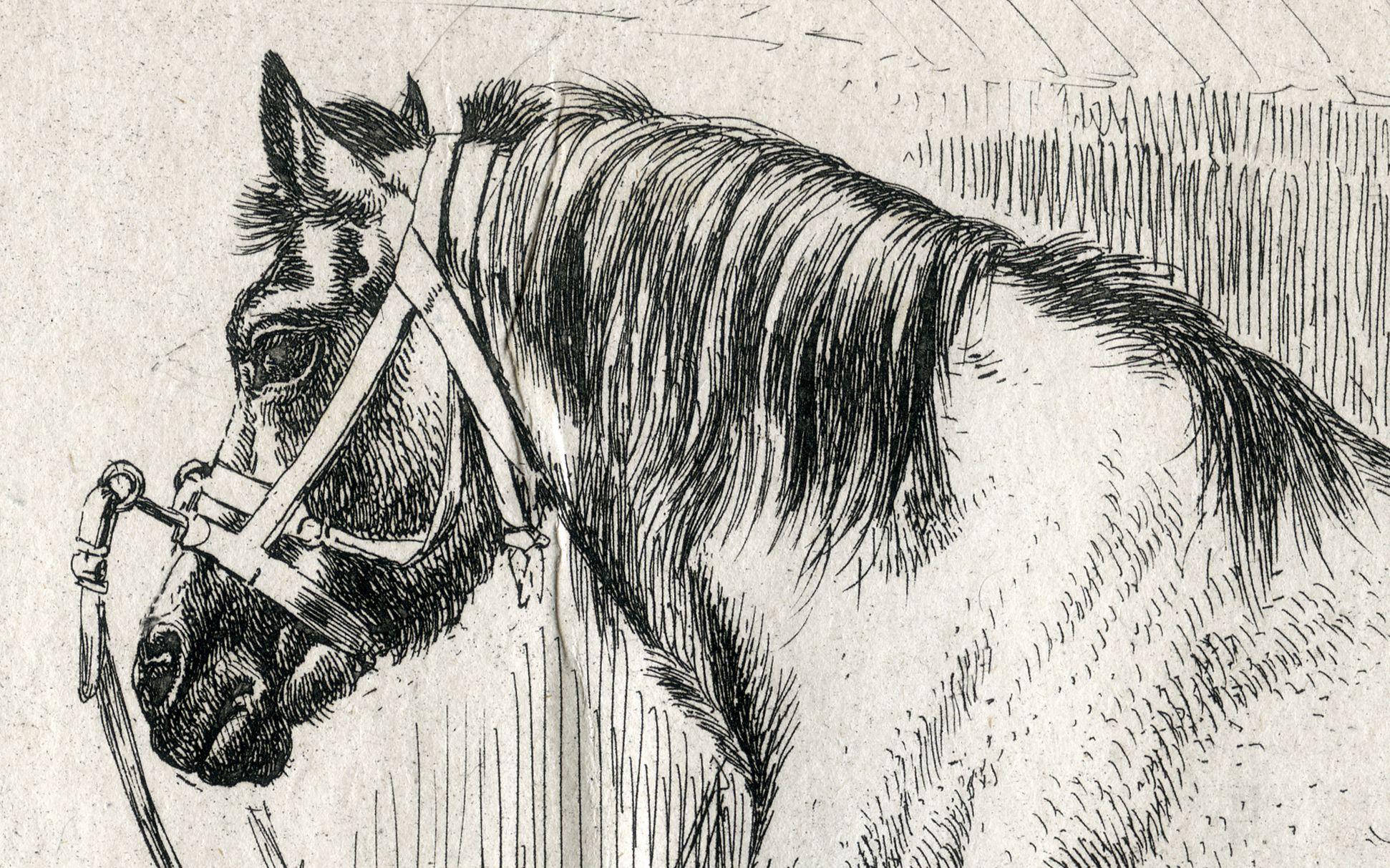 Das Pferd mit dem Kappzaum Pferdekopf mit Mähne