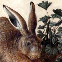 Der Hase (Rom)
