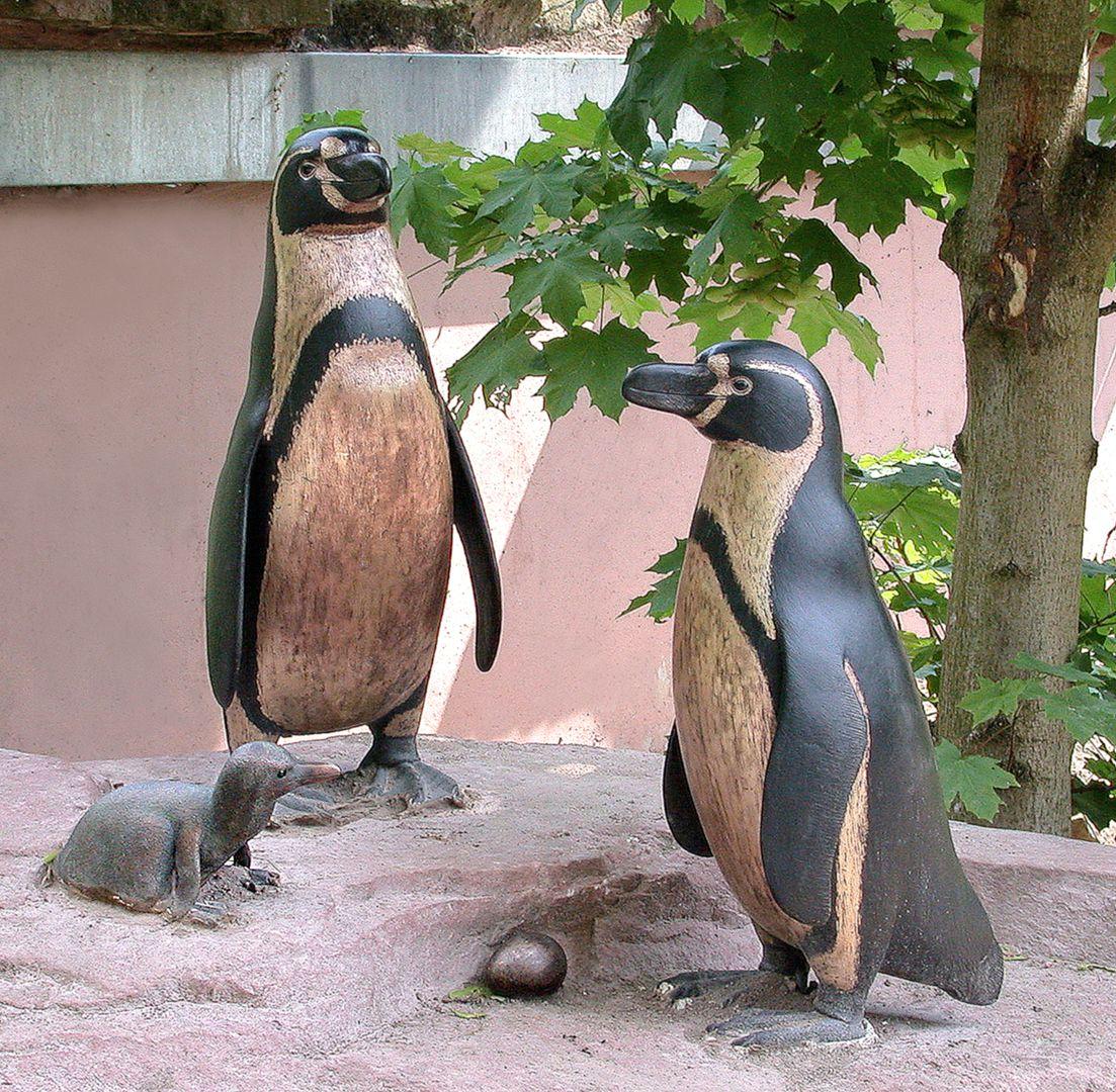 Humboldt-Pinguin-Familie