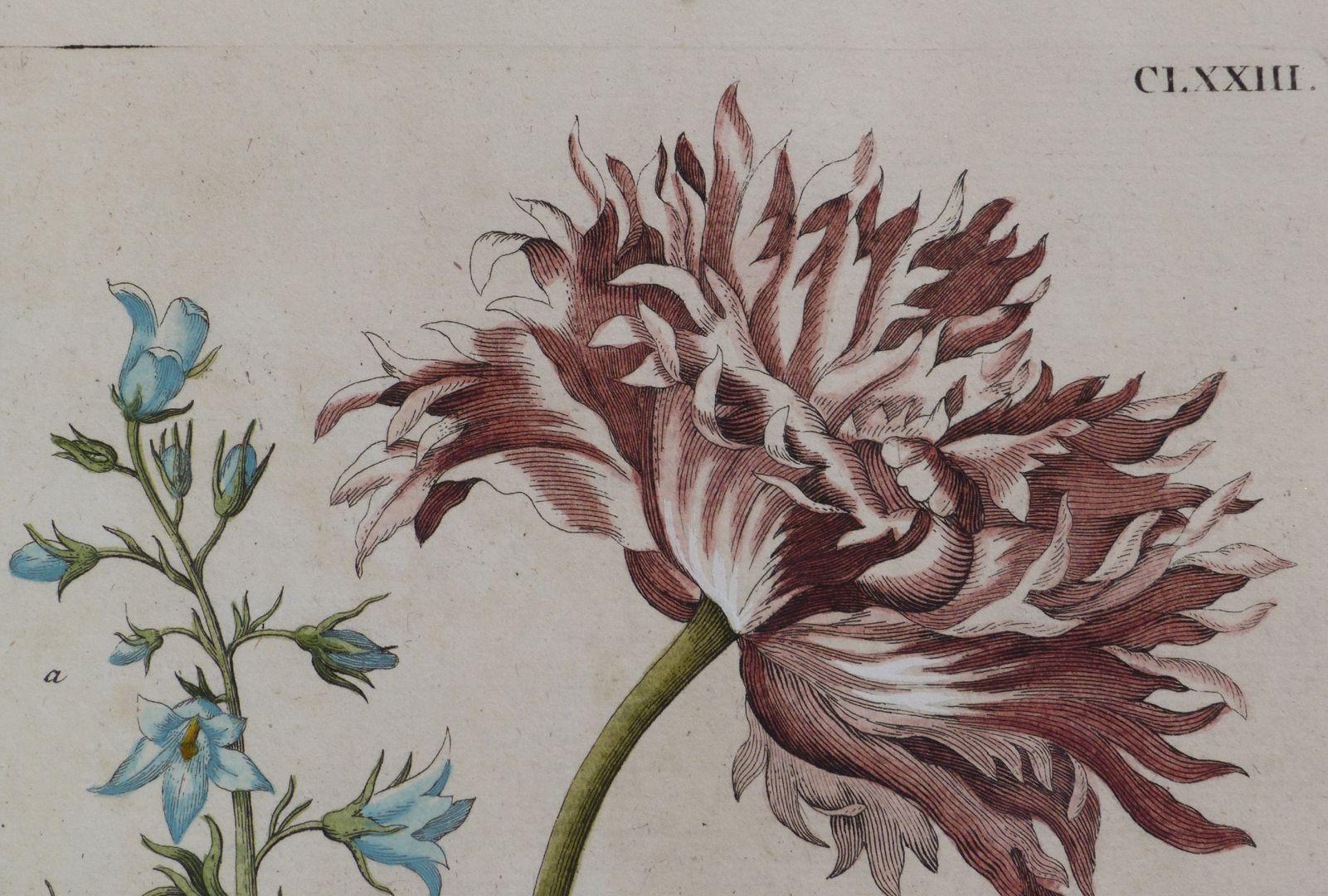 Magsamen-Blume = blaue Wiesen=Glöcklein / und ein Stieglitz / oder Distelfink obere Blatthälfte