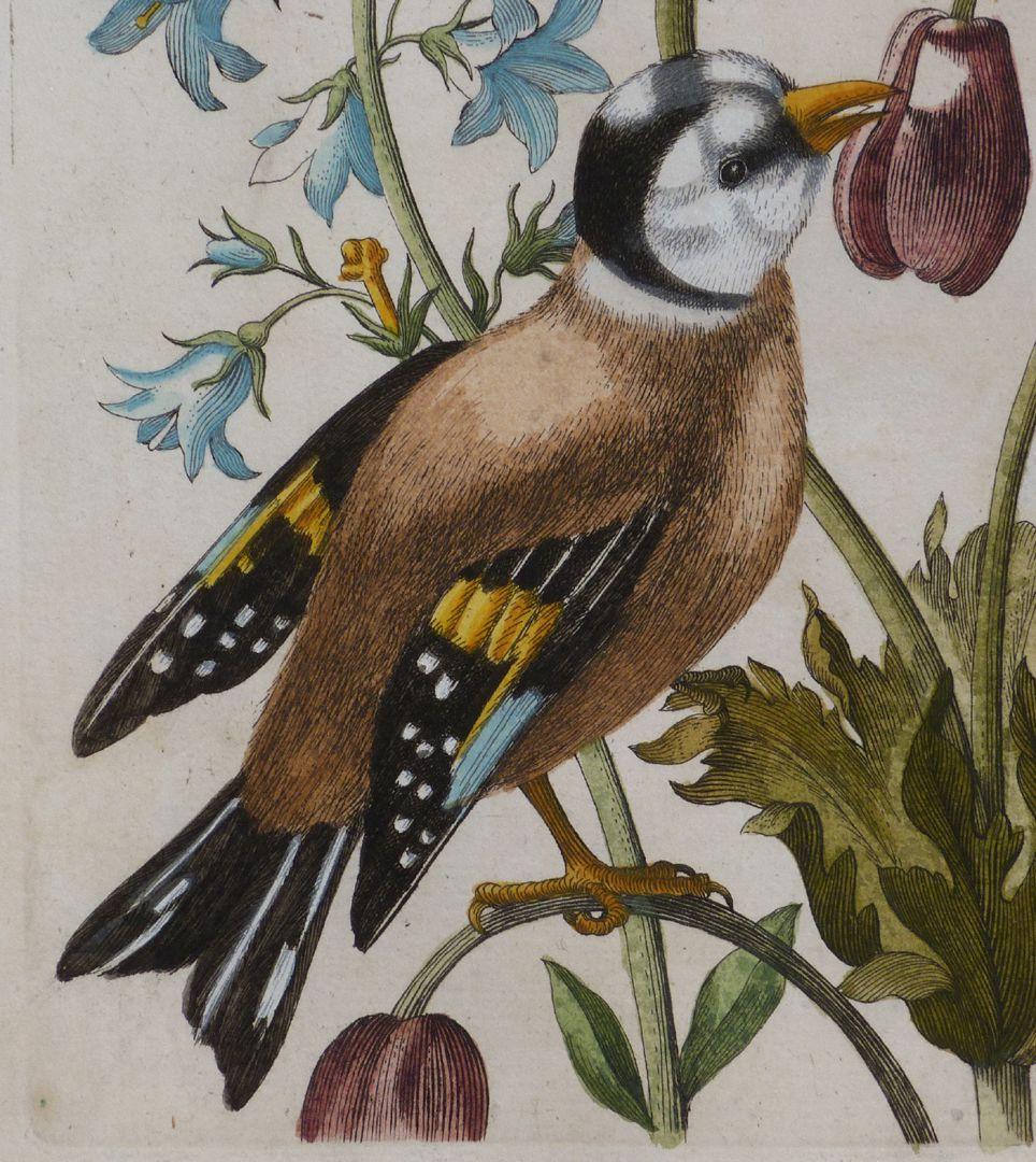 Magsamen-Blume = blaue Wiesen=Glöcklein / und ein Stieglitz / oder Distelfink Stieglitz oder Distelfink