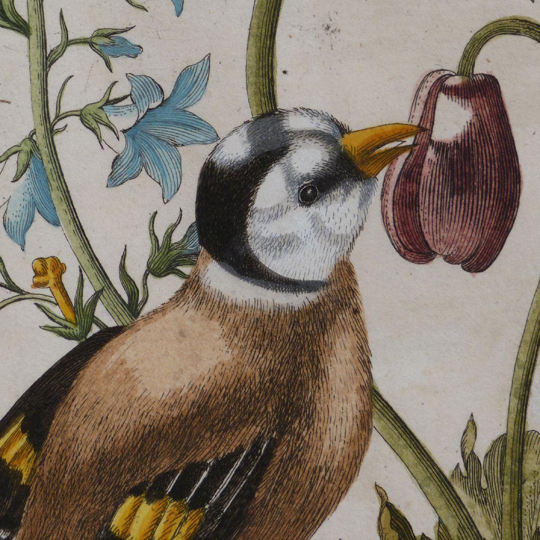Magsamen-Blume = blaue Wiesen=Glöcklein / und ein Stieglitz / oder Distelfink Stieglitz oder Distelfink, Detail
