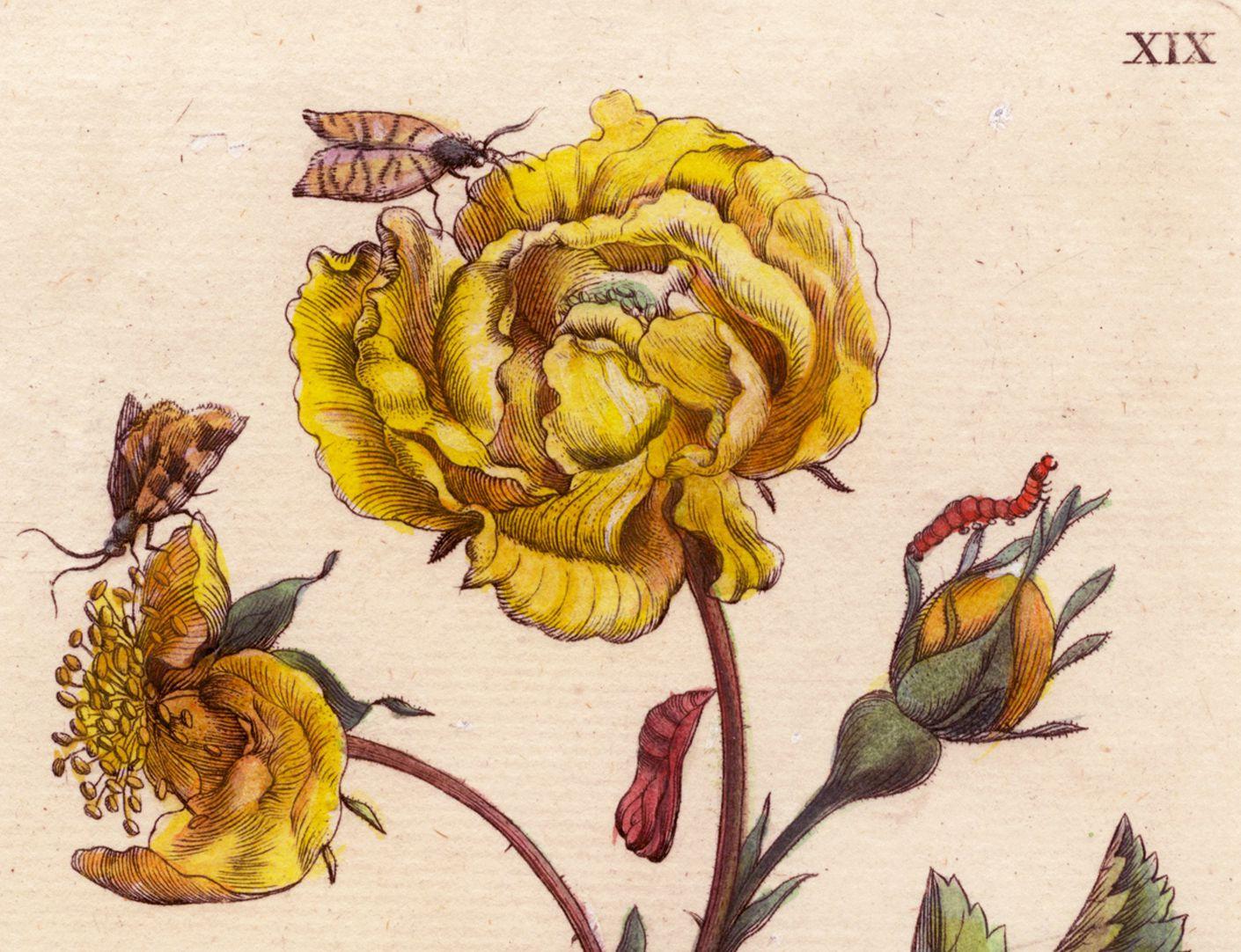 Rose obere Blatthälfte, Detail