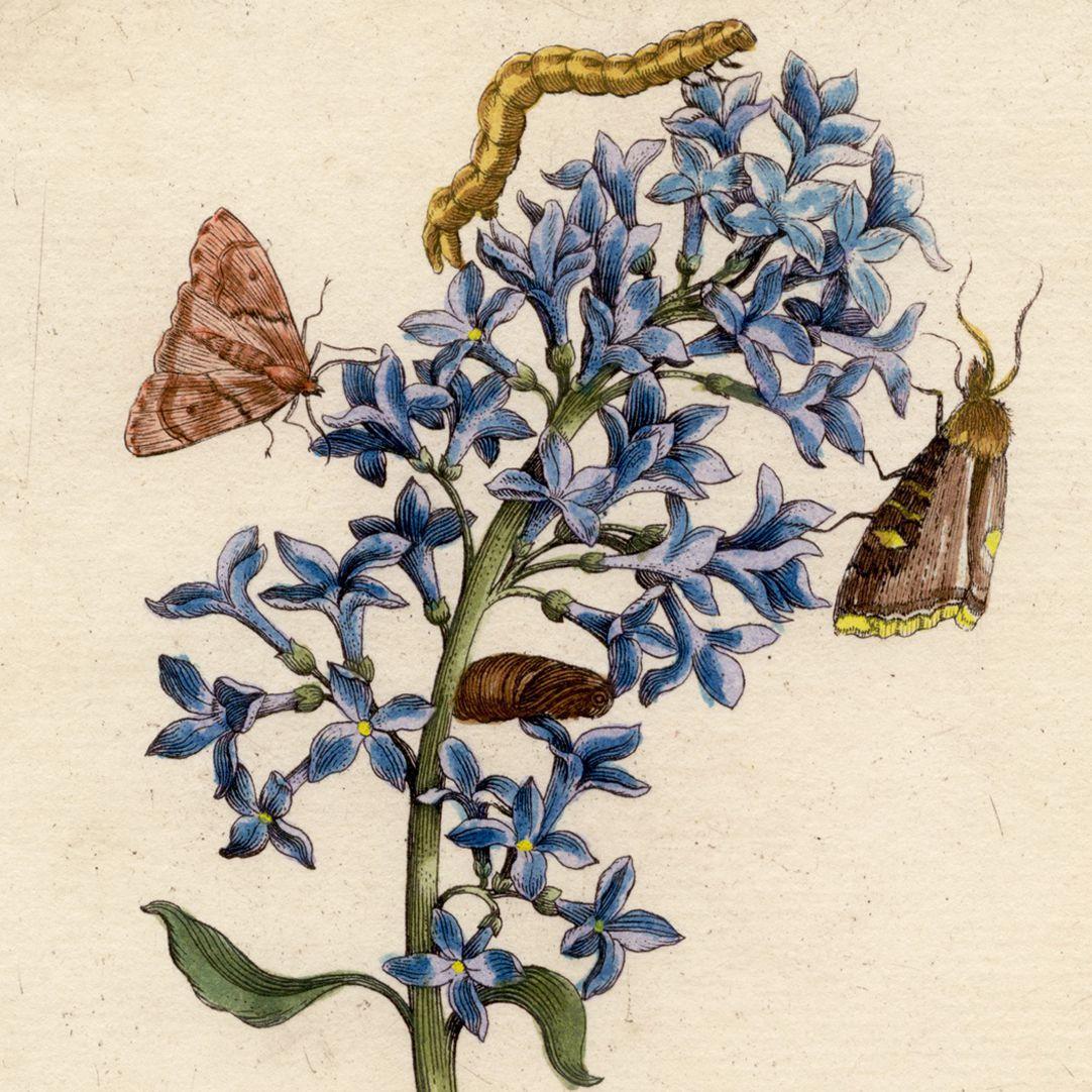 Blauer Flieder obere Blatthälfte, Detail