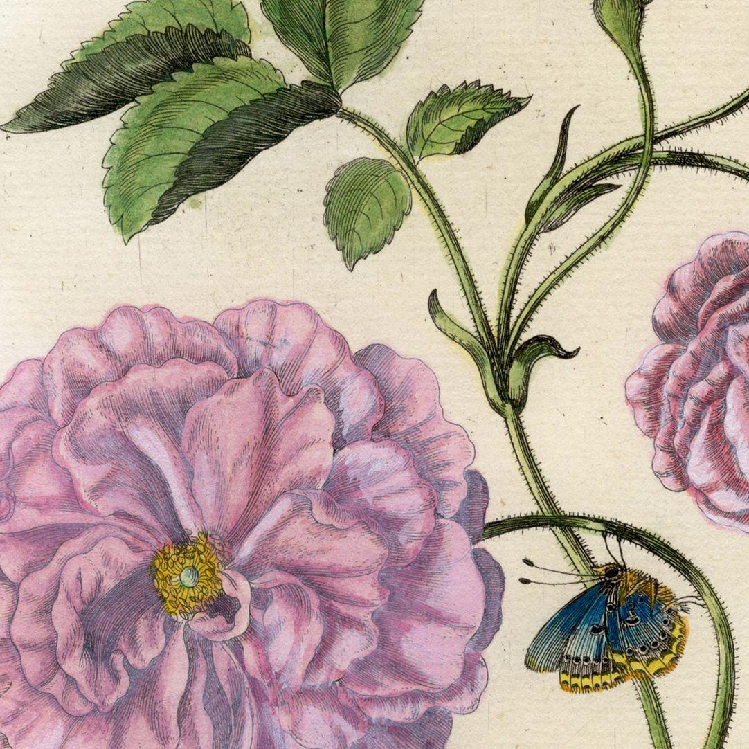 Holländische Rose linke Blatthälfte, Detail