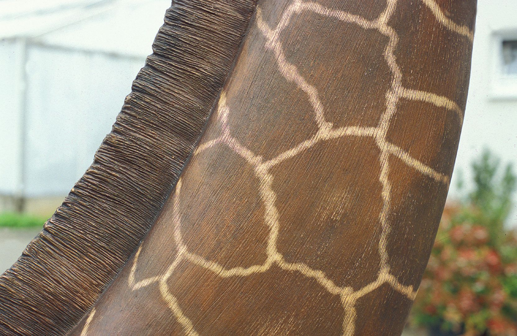 Netzgiraffe Hals, Detail
