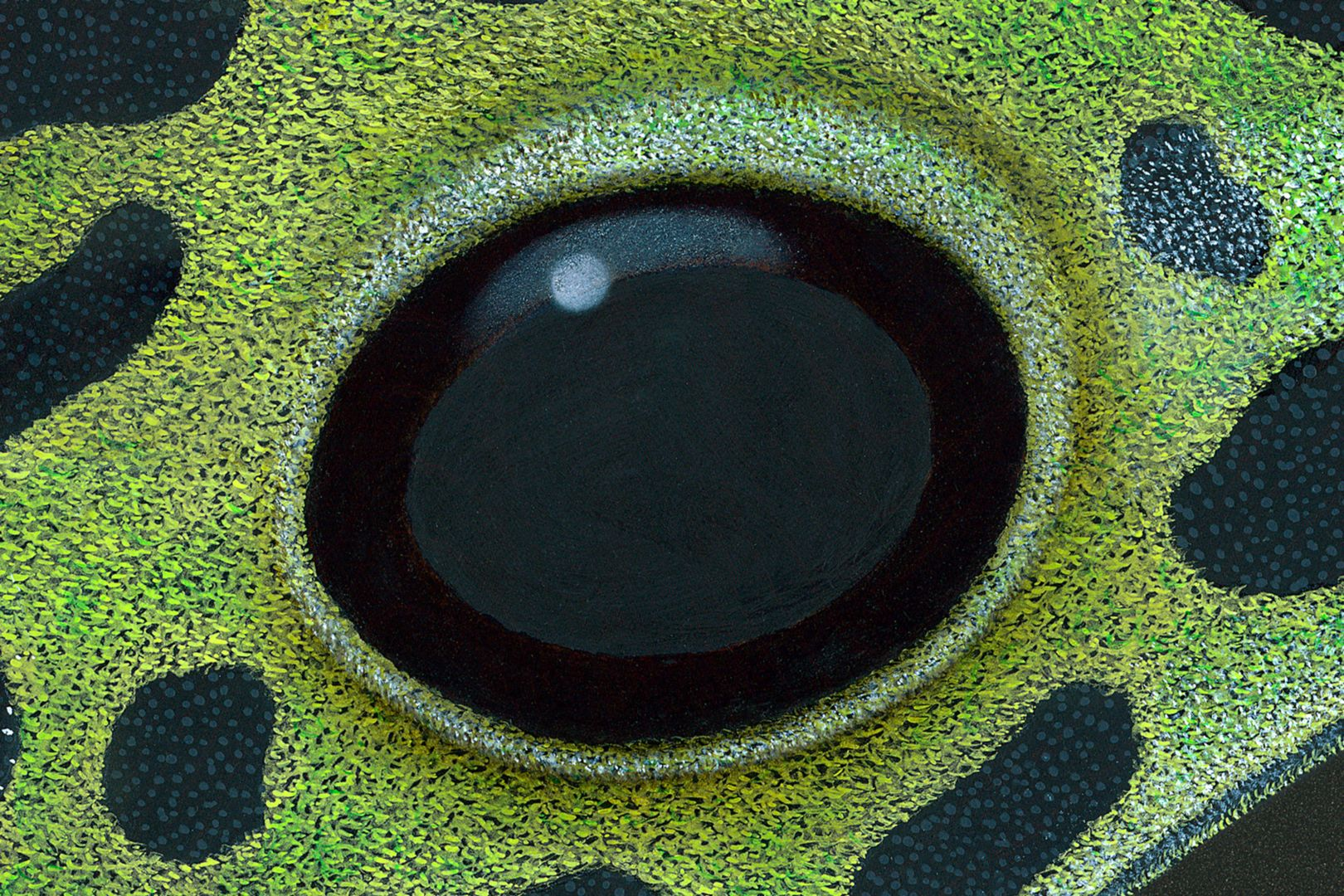 Pfeilgiftfrosch Auge