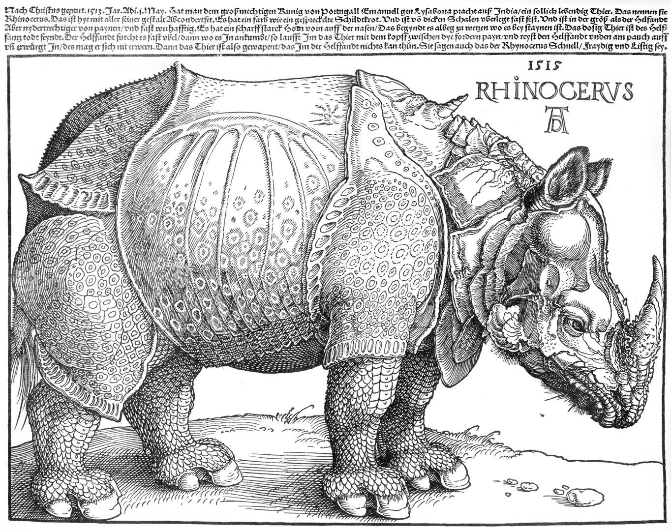 Rhinocerus Gesamtblatt
