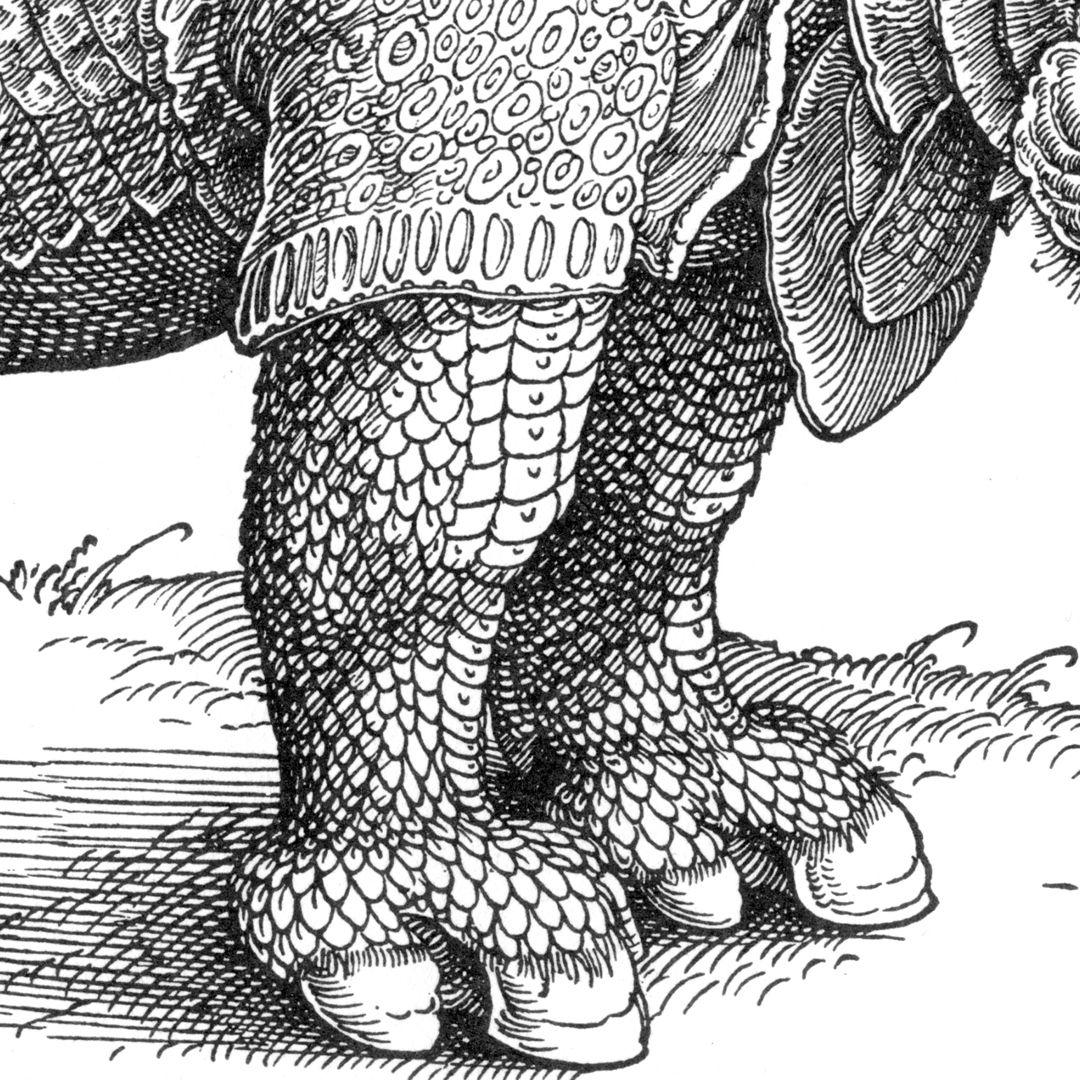 Rhinocerus Vorderbeine