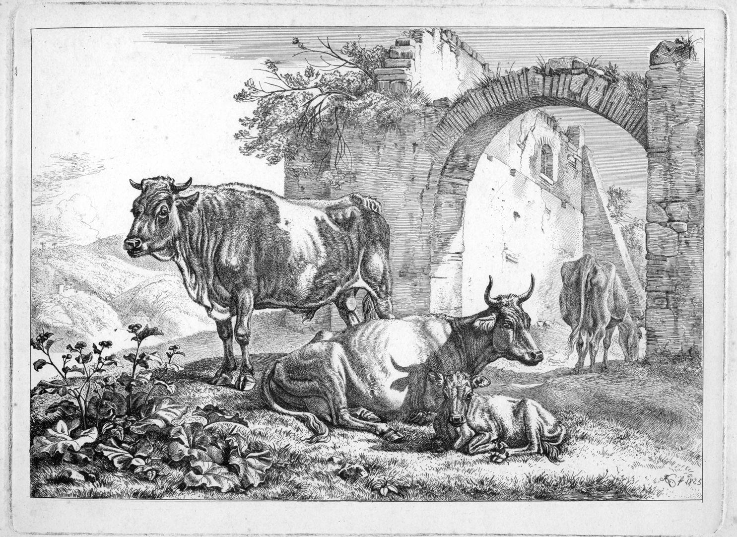 Rindvieh bei Ruinen Gesamtansicht