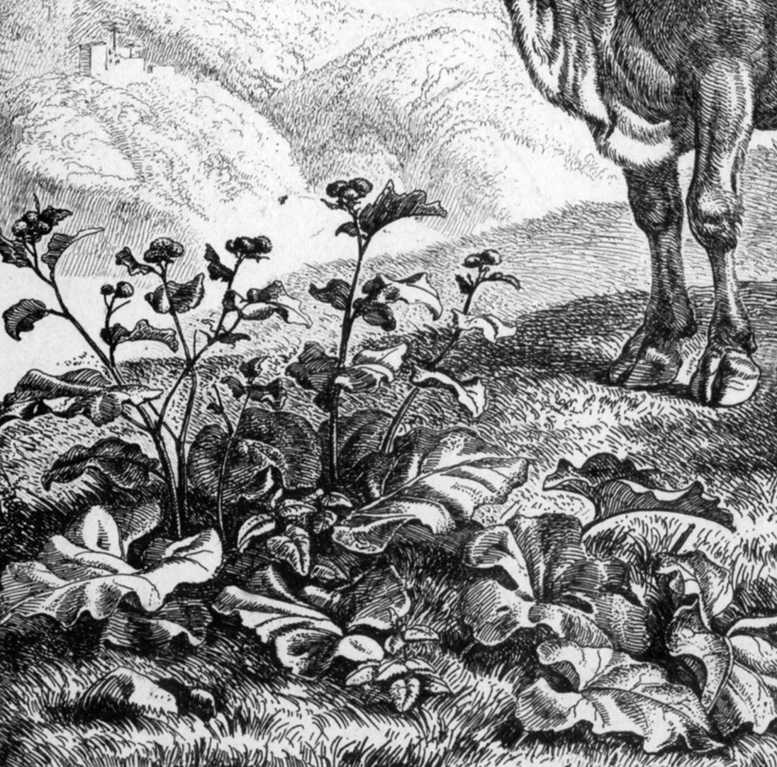 Rindvieh bei Ruinen Detail mit Pflanzen