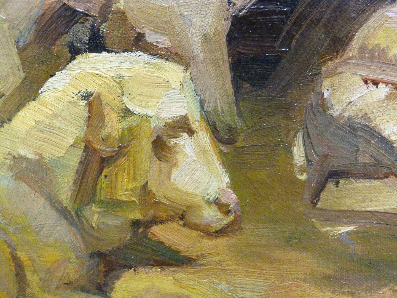 Schafe Detailansicht mit Schafskopf