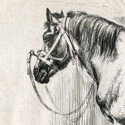 Das Pferd mit dem Kappzaum