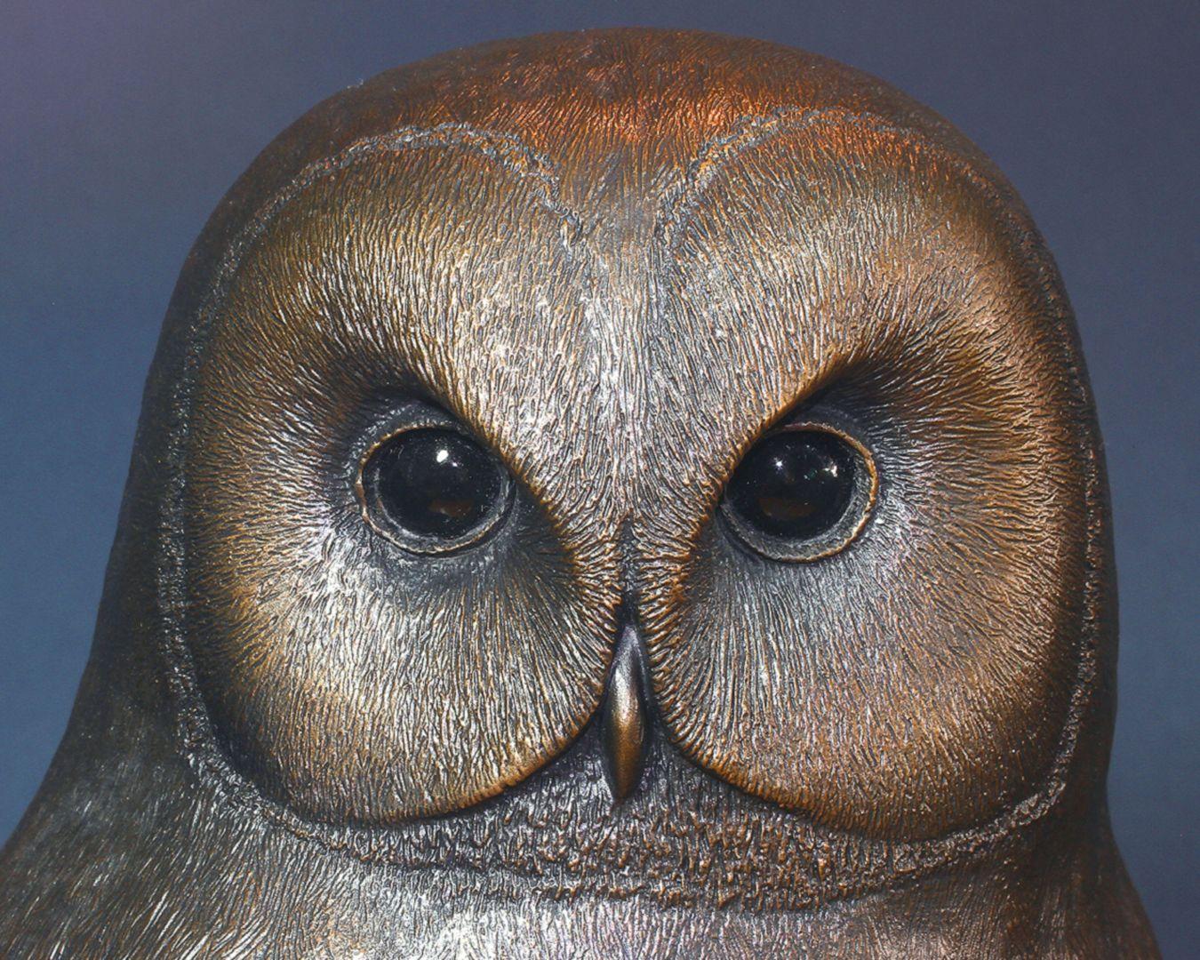 Waldkauz Gesicht