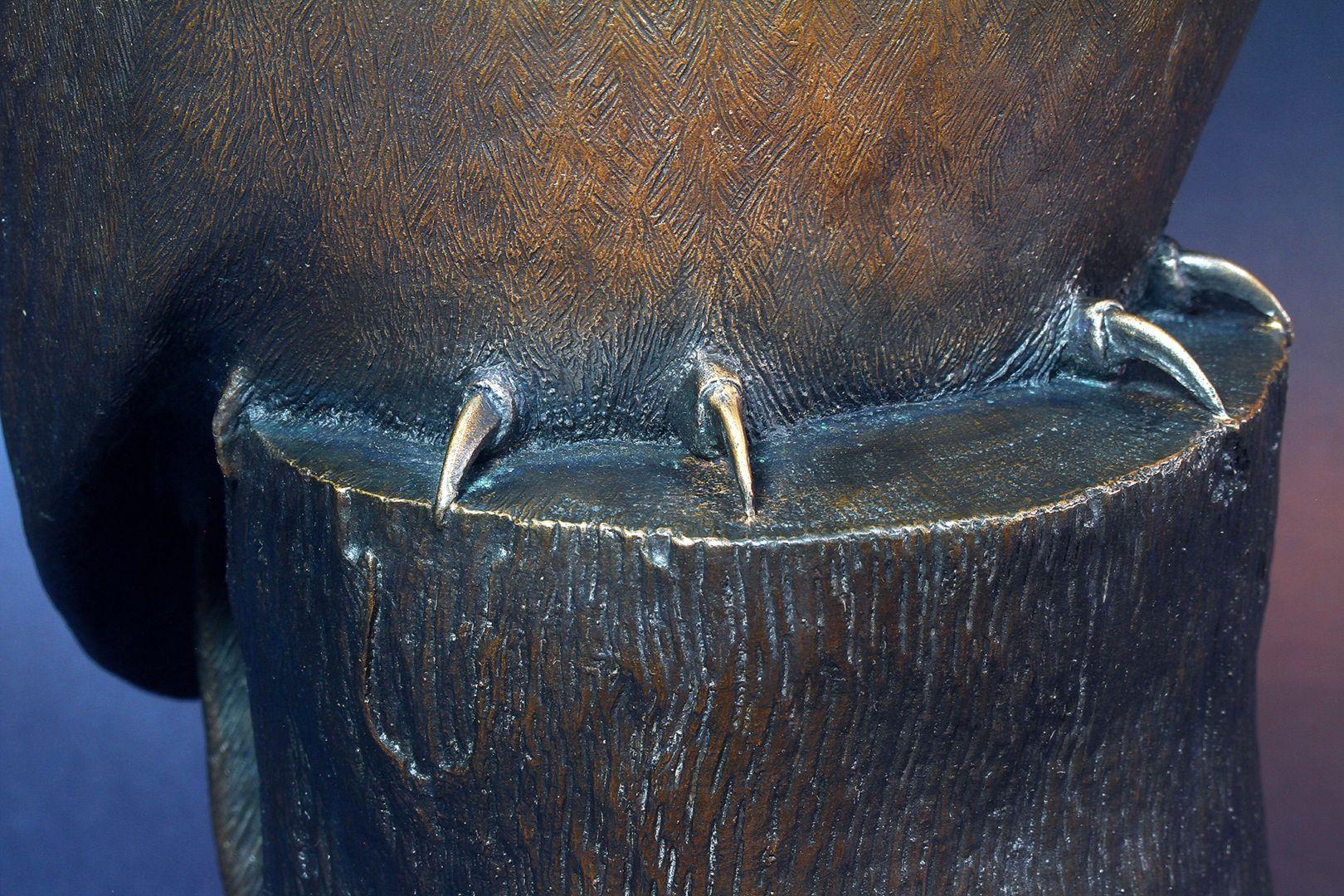 Waldkauz vordere Ansicht, Detail mit Krallen auf dem Baumstamm